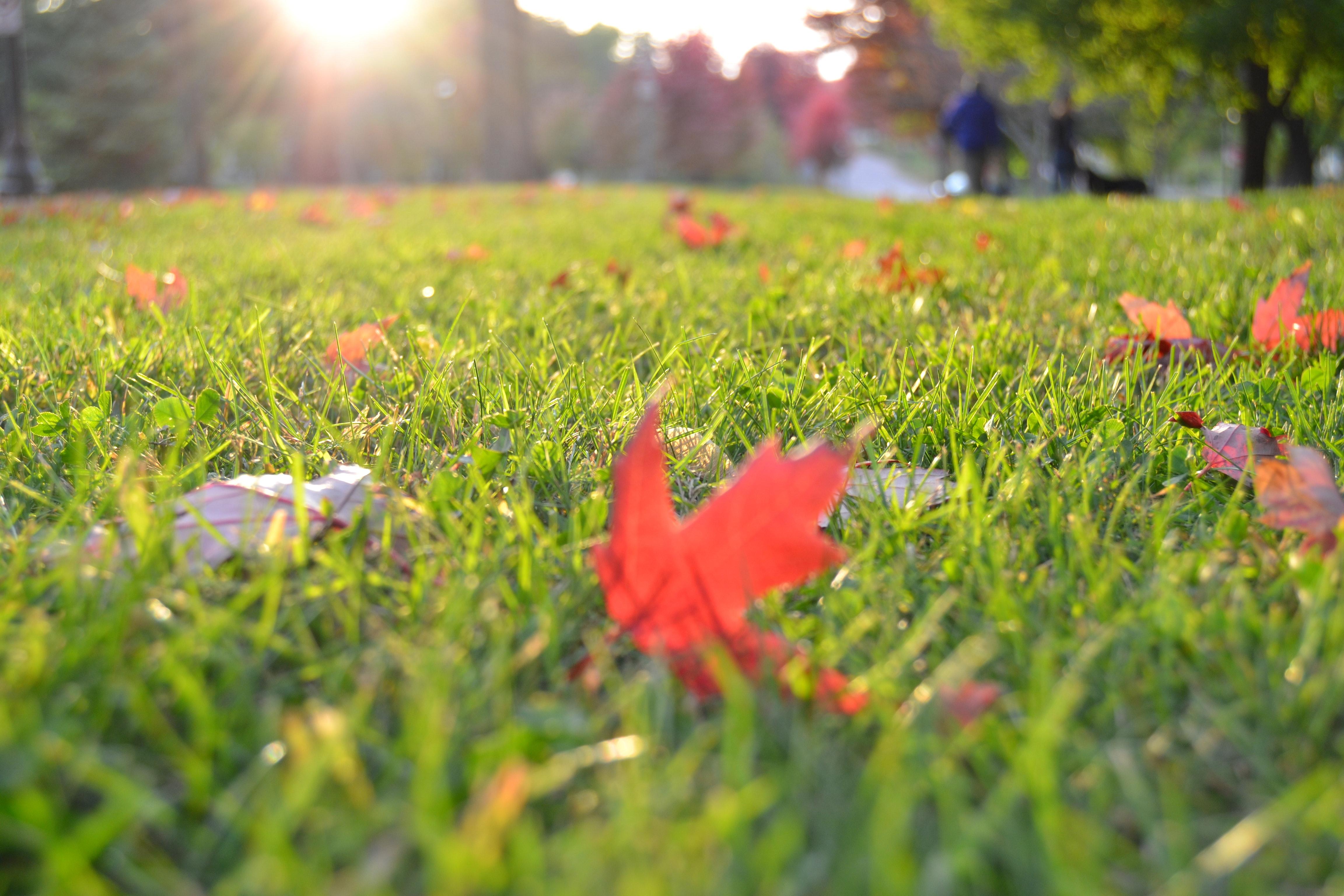 Lawn Care Myths You Should Stop Believing, sprinkler system