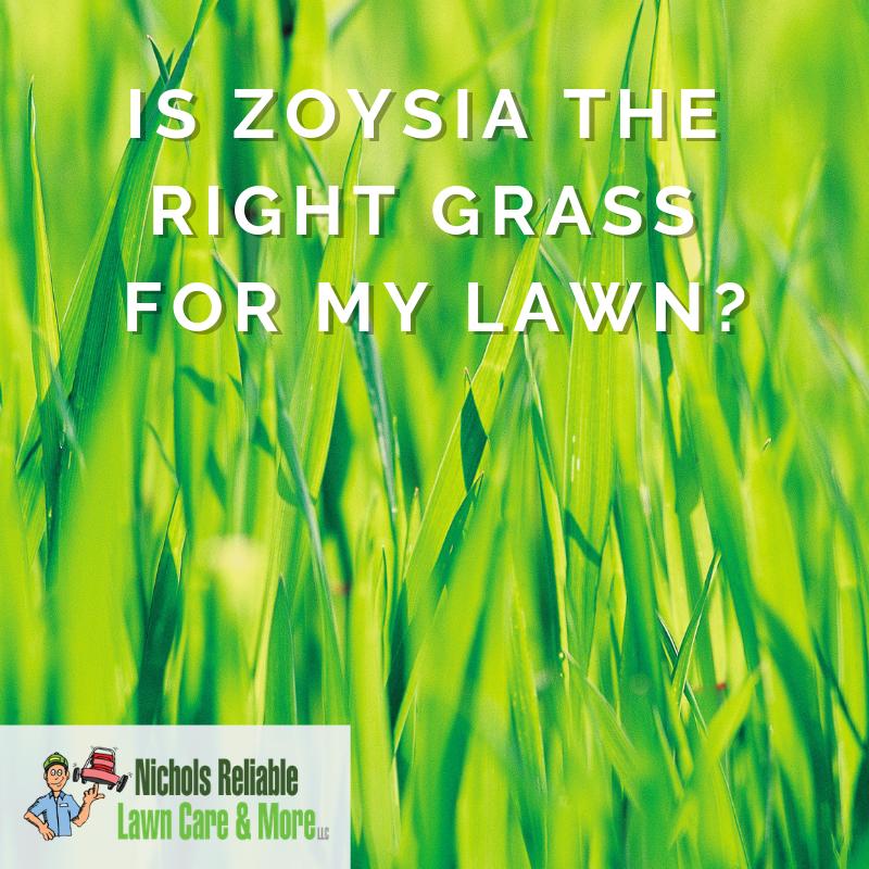 zoysia, grass, lawn care, Nichols Reliable
