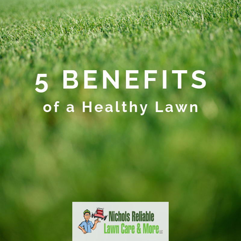healthy awn, benefits, grass, lawn care service, national lawn care month, Nichols Reliable, environment