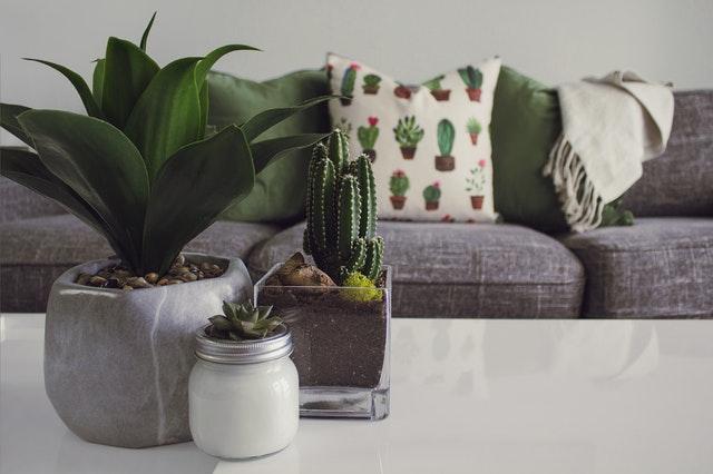 lawn care, indoor plants, easy, low-maintenance, houseplants, national indoor plants week
