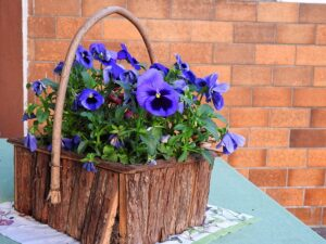 fall, container plant, ideas, lawn care, advice, flowers, marigolds, mums, snapdragons, ornamental grass, northwest arkansas