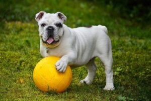 pet waste removal, scooping poop, dog, yard, lawn, lawn care, manitnenance. services, northwest arkansas