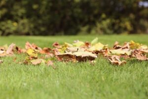 Lawn Care, fall, september, tips, dethatch, aerate, fertilize, new lawn, seeding lawn, mowing height